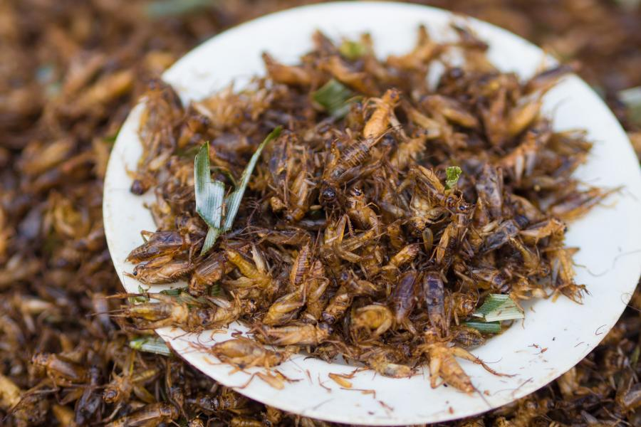 crickets, insects