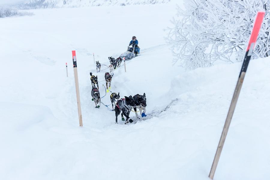 Abbie West and team climb a steep incline on the outskirts of Dawson after leaving the banks of the Yukon River