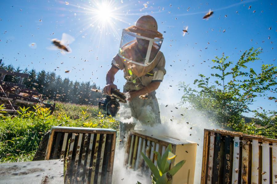 honeybees, apiary, beekeeper
