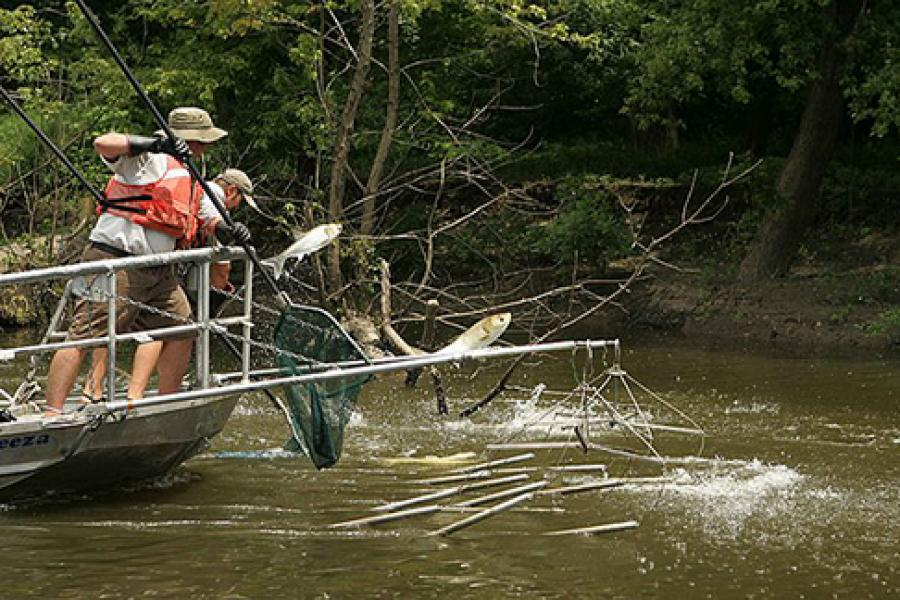 Fishing for Asian carp