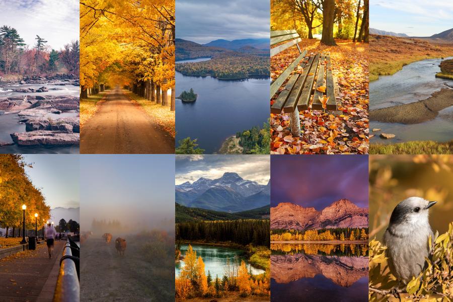 composite of autumn photos canada