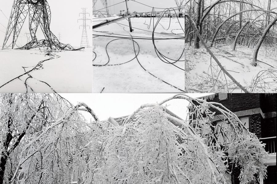 ice storm, trees, power lines