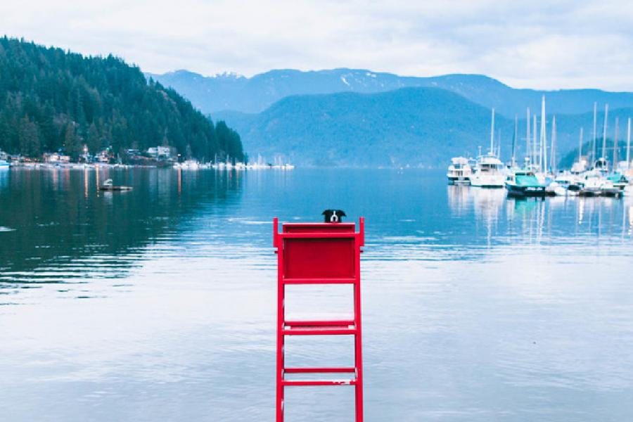 Momo the border collie hides on a lifeguard stand in Deep Cove, B.C.