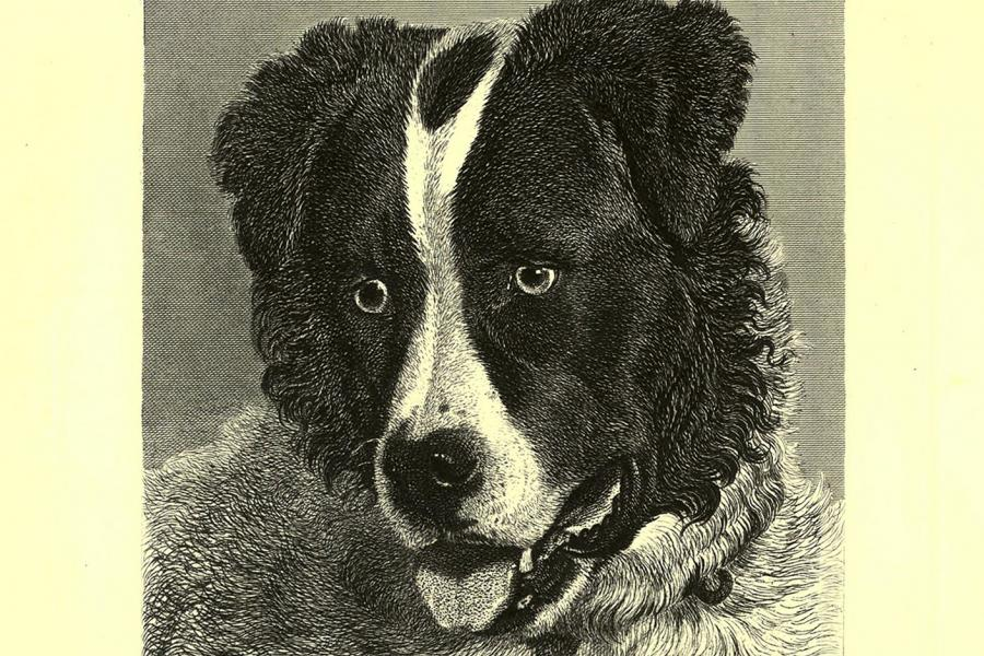 Neptune, a Newfoundland dog who sailed on HMS Erebus