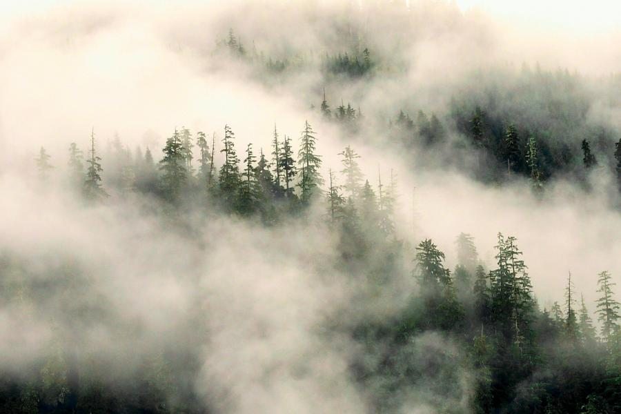 Ground fog in the Great Bear Rainforest