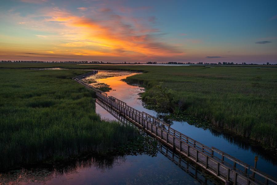 The marsh boardwalk through Point Pelee National Park at sunset