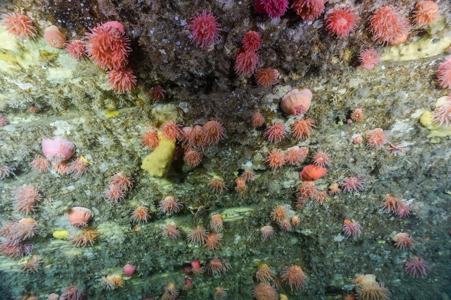 A wall of colourful sponges and anemones in the American Bank Marine Protected Area