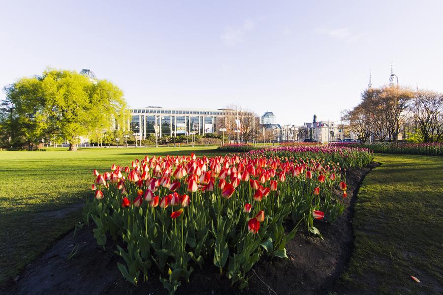 Canadian Tulip Festival Majors Hill Park Ottawa
