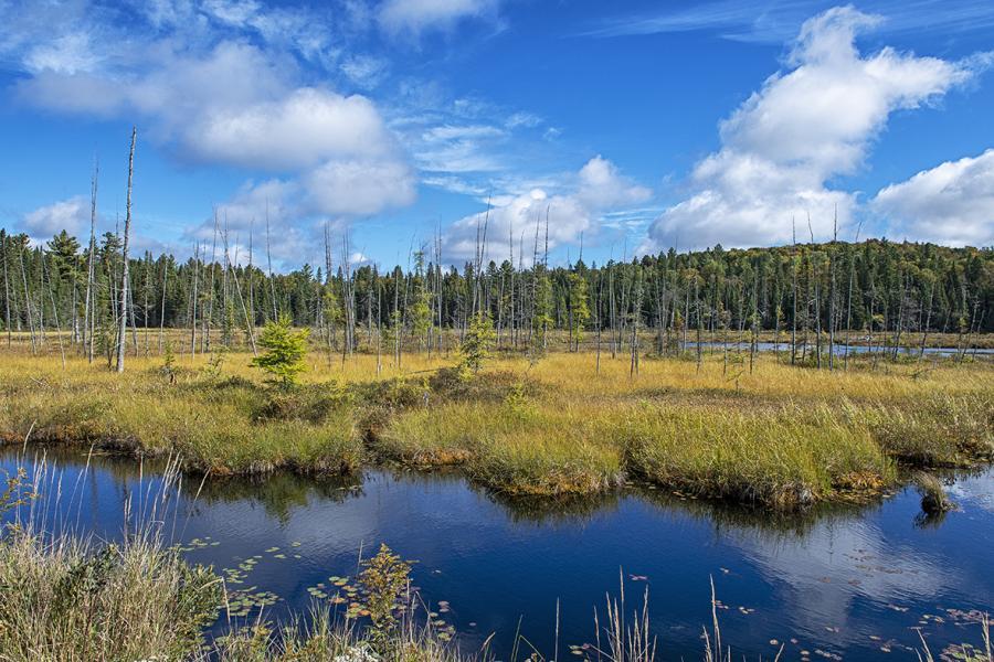 Boreal wetland Algonquin Provincial Park