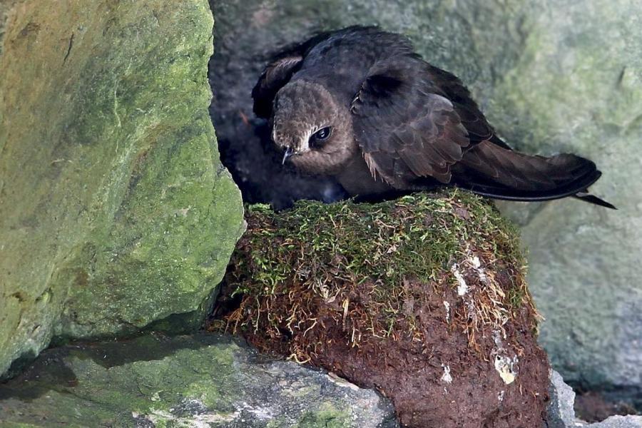 Bird sits on rock