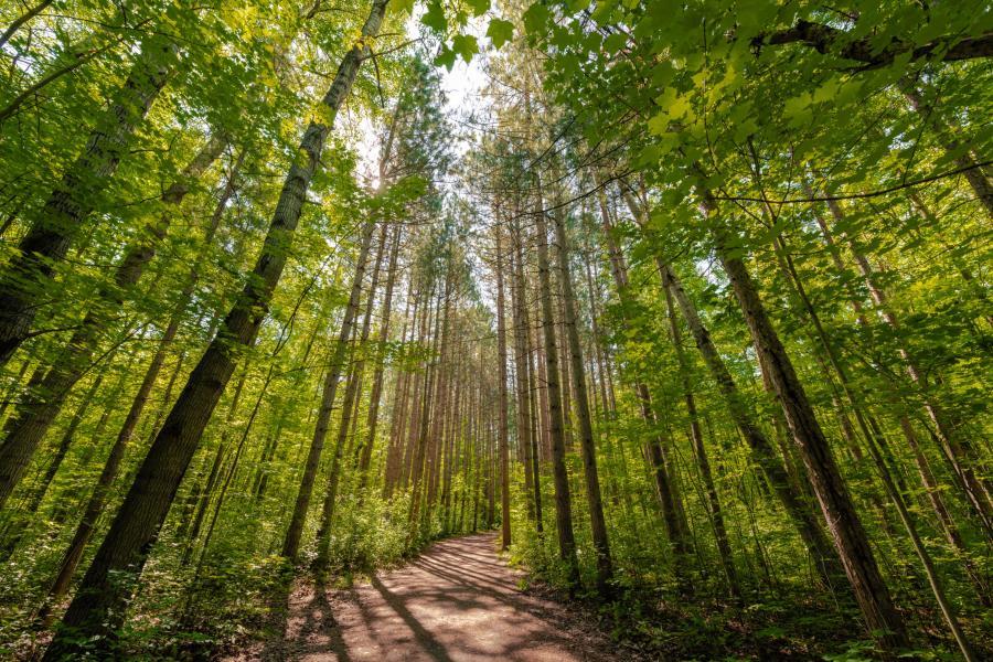 Forest trail in Ottawa, Ontario