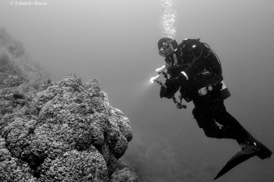 A diver takes photos of a coral reef underwater