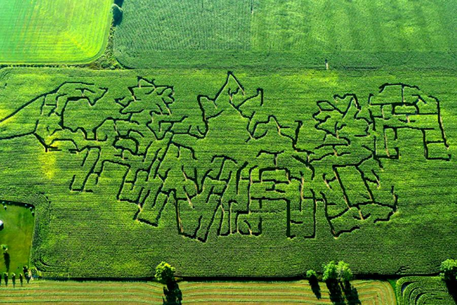 "The Waterloo County Corn Maze in Crosshill, Ont., spelled out ""Canada"" last year."