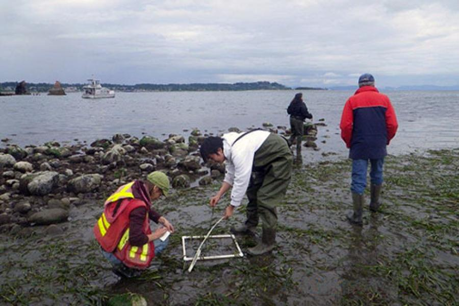 Project Watershed members hope eelgrass's carbon-sequestration abilities could fund the plant's restoration in K'ómoks Estuary, British Columbia