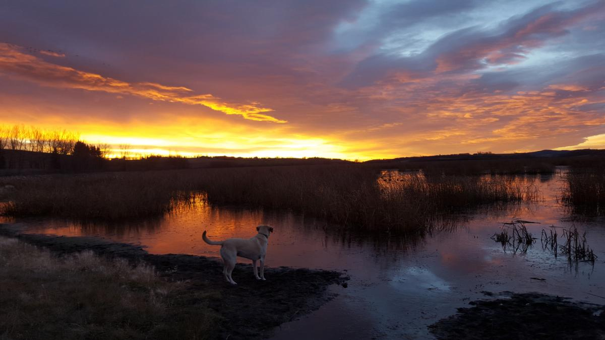 A sunset photo taken with a cell phone by CanGeo Photo Club member Marni Brost