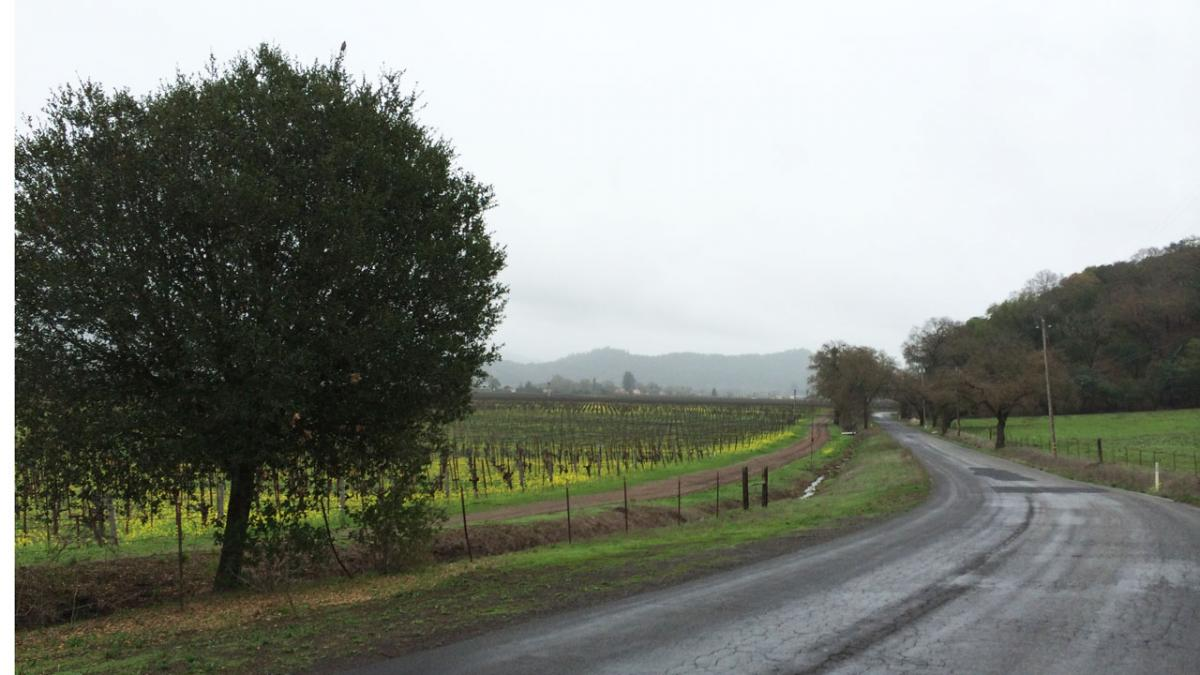 Biking by the vineyards in Napa Valley, Calif.