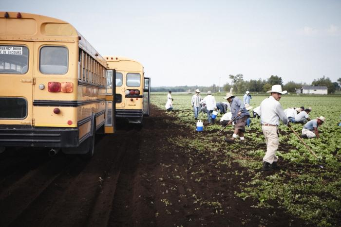 Workers are moved by school bus from one field to another. (Photo: Rodolphe Poulin)