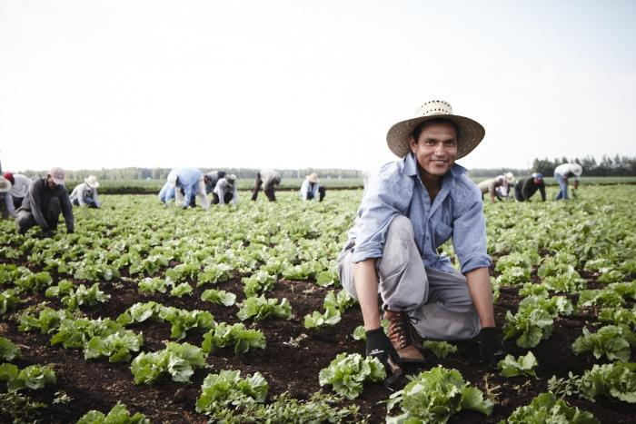 Portrait of a worker in a lettuce field. (Photo: Rodolphe Poulin)