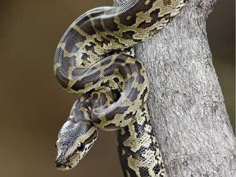 snakebit confessions of a herpetologist