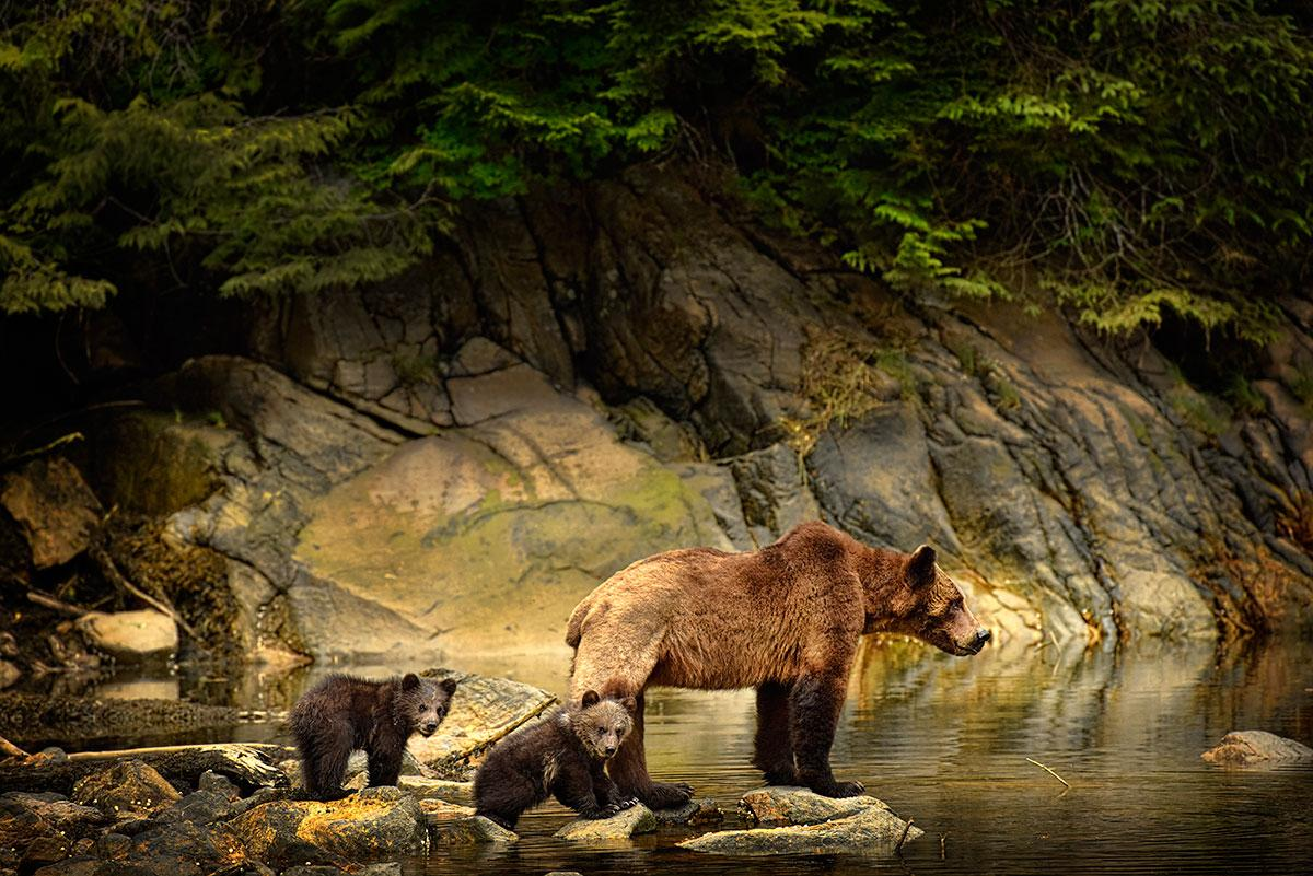 A grizzly with two cubs (Photo: Michelle Valberg/CanGeo Photo Club)