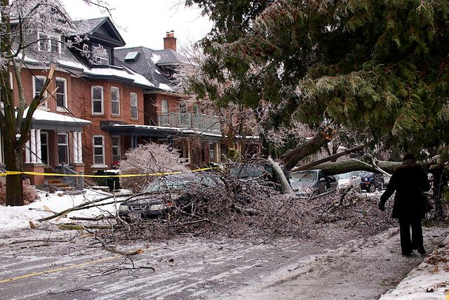 Damaged vehicles and downed power lines beneath a fallen tree in Toronto during the 2013 ice storm.