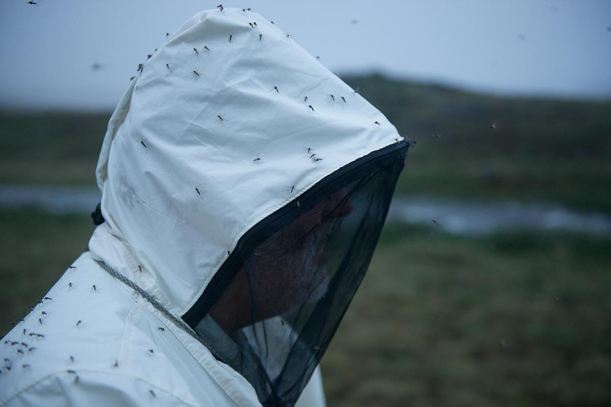 Eric Hoberg, a Senior Researcher at the Animal Parasitic Diseases Laboratory at the United States Department of Agriculture, is swarmed by mosquitos while doing fieldwork at Elu Inlet, near Cambridge Bay.