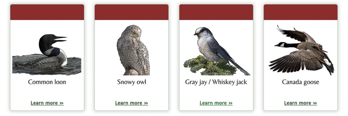 national bird finalists