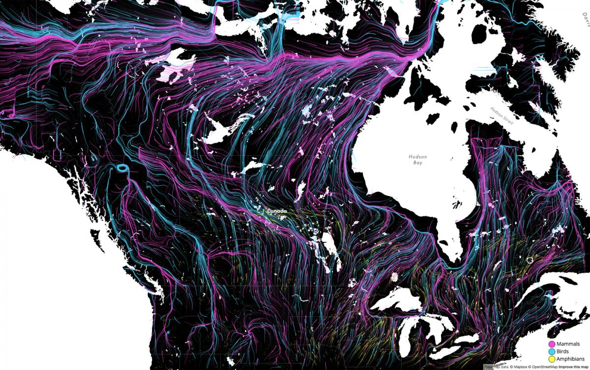 A still image of The Nature Conservancy's animated 'Migrations in Motion' map