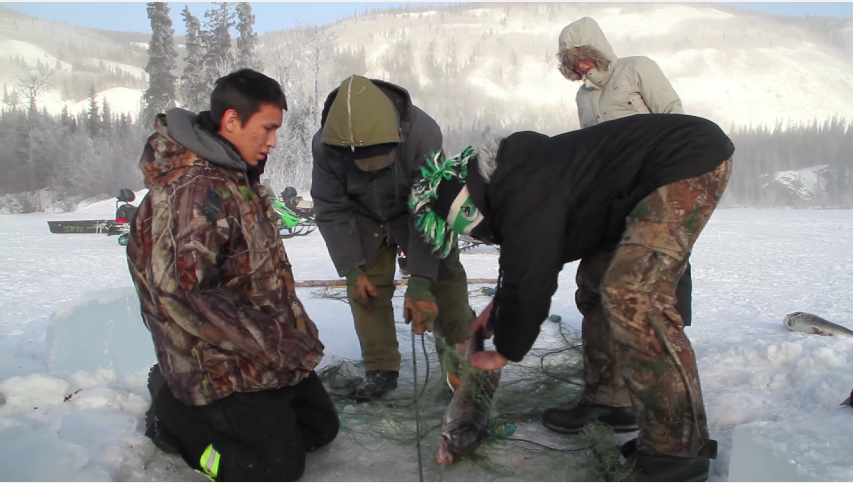 A group from the Selkirk First Nation catches a salmon in a net.