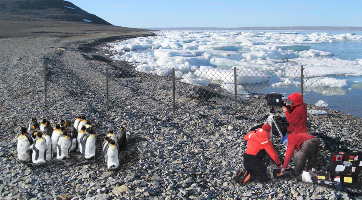 Researchers film penguins in Resolute Bay, Nunavut