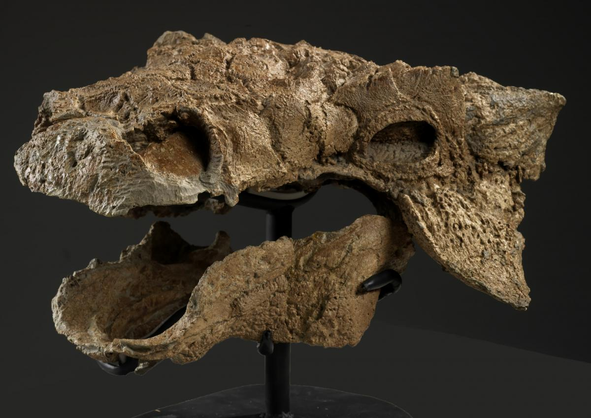 Zuul ankylosaur dinosaur Ghostbusters