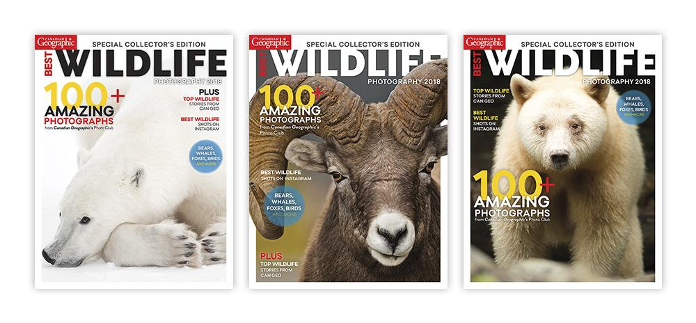 covers, magazine, wildlife, polar bear, bighorn sheep, spirit bear