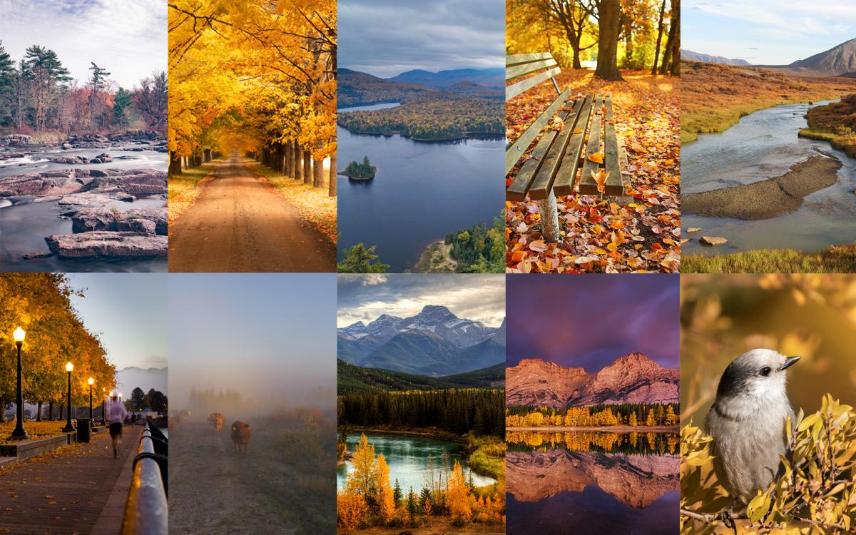 composite of autumn photos canada