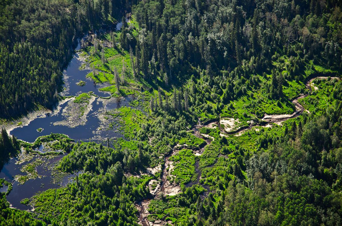 Boreal forest landscape near Fort McMurray, Alta.