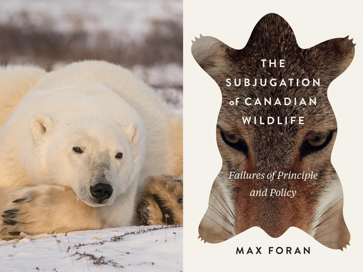 """Image of a polar bear, and the cover of """"The Subjugation of Canadian wildlife"""""""