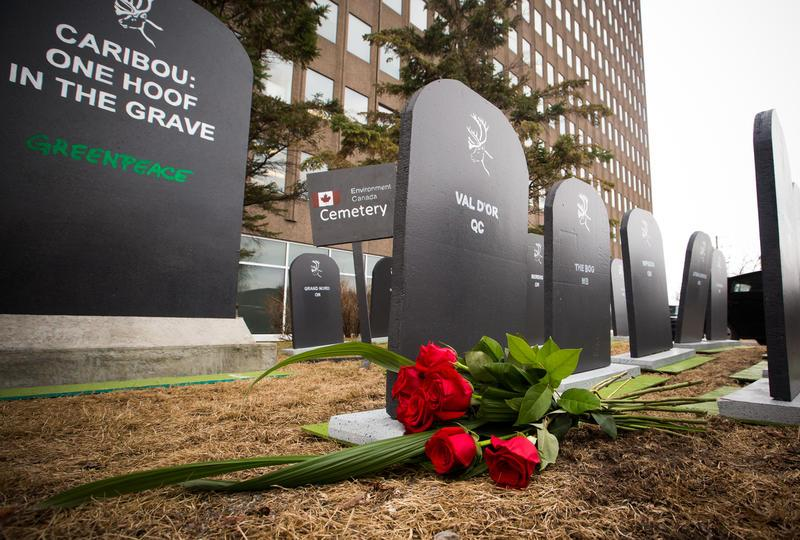 Tombstones representing each of Canada's 51 endangered caribou herds set up outside the Ministry of Environment and Climate Change Canada in Gatineau, Que. May 1st, 2018