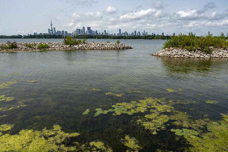 wetlands, toronto skyline, tommy thompson park