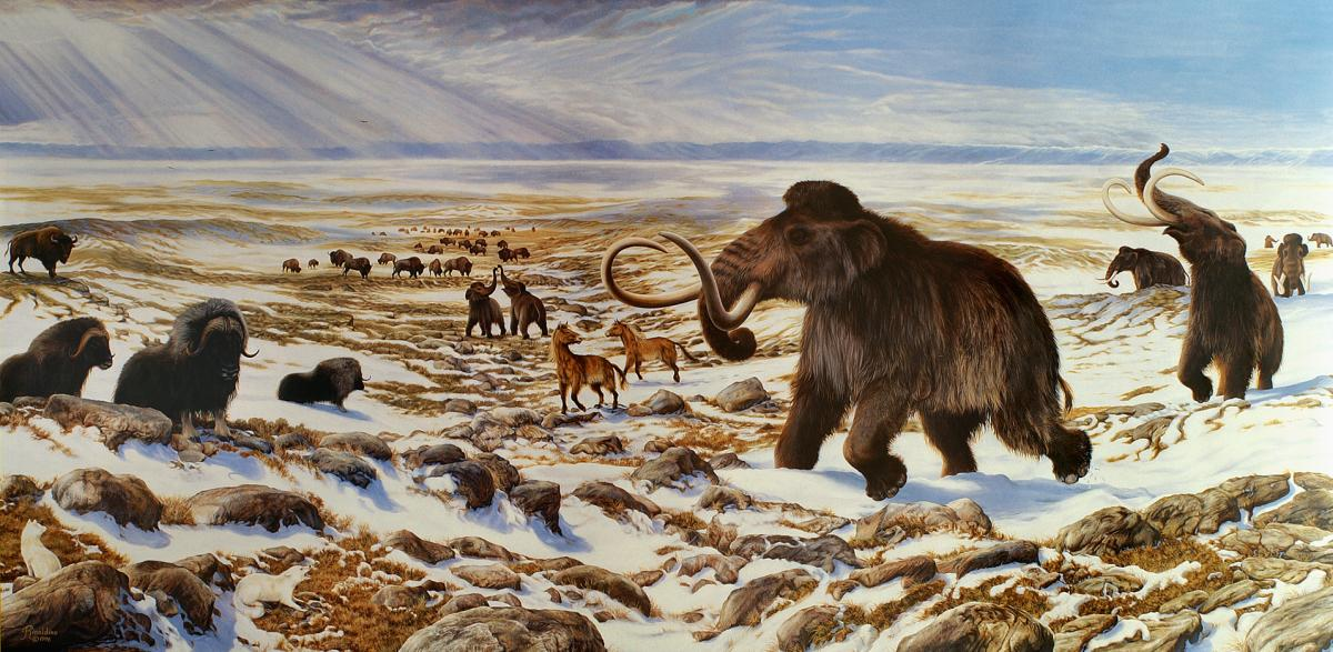 Unearthing clues to the mystery of the great Pleistocene extinction in Yukon