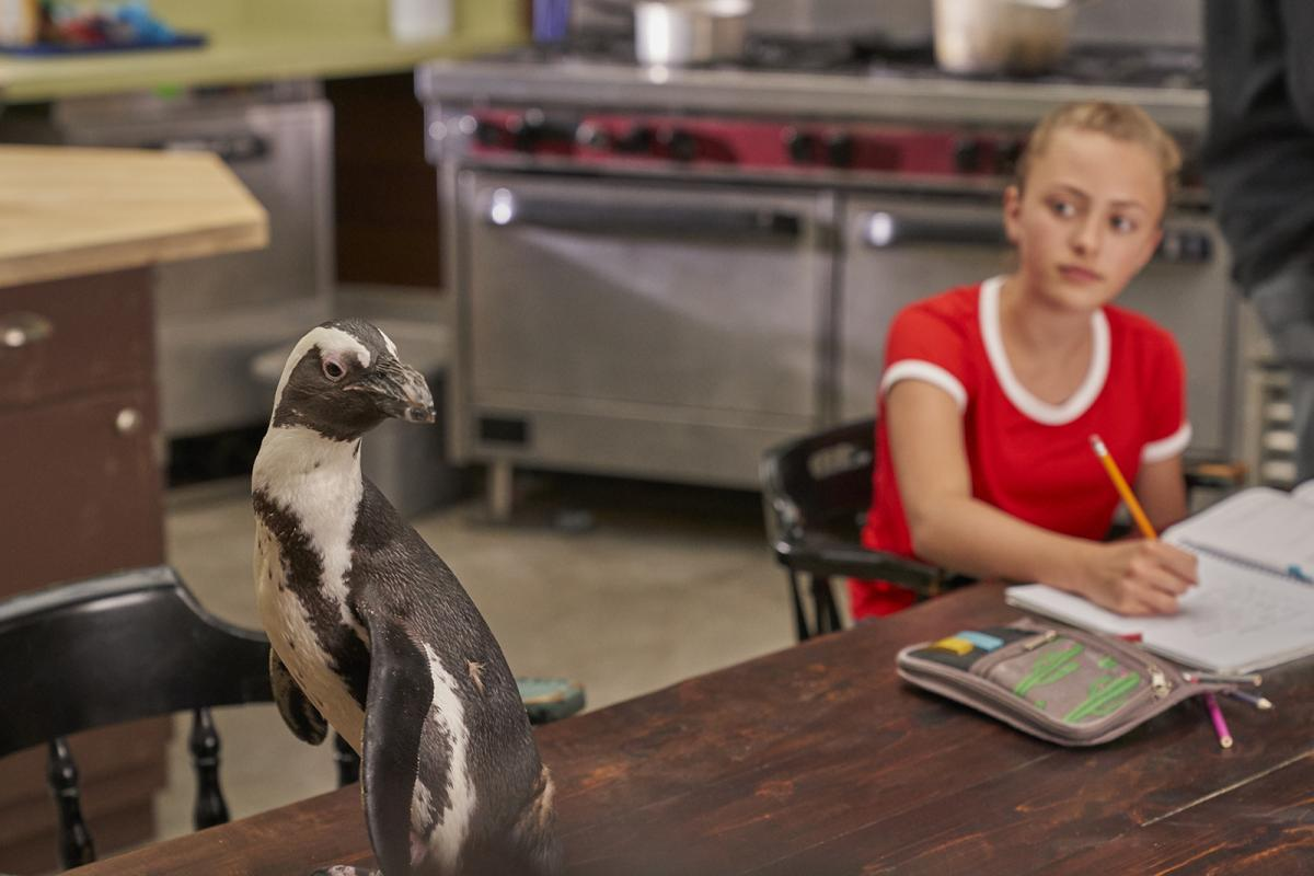 Dayo, an African penguin, sits on a tabletop where actress Taylor Thorne, in character as Taylor West, is completing homework