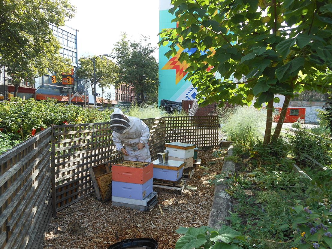 A person in a beekeeping suit takes a honey sample from a hive box in an urban garden