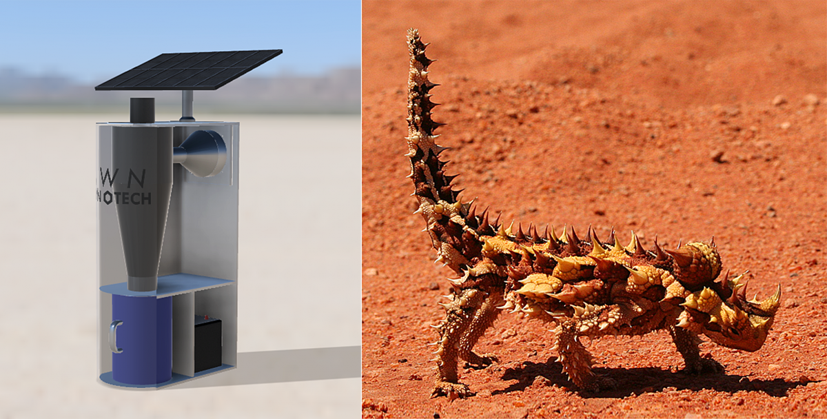 The lizard-inspired Canadian innovation that pulls drinking water out of thin air