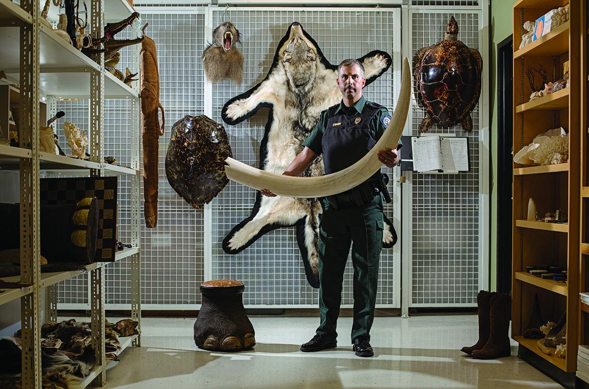 Wildlife Enforcement Directorate Office
