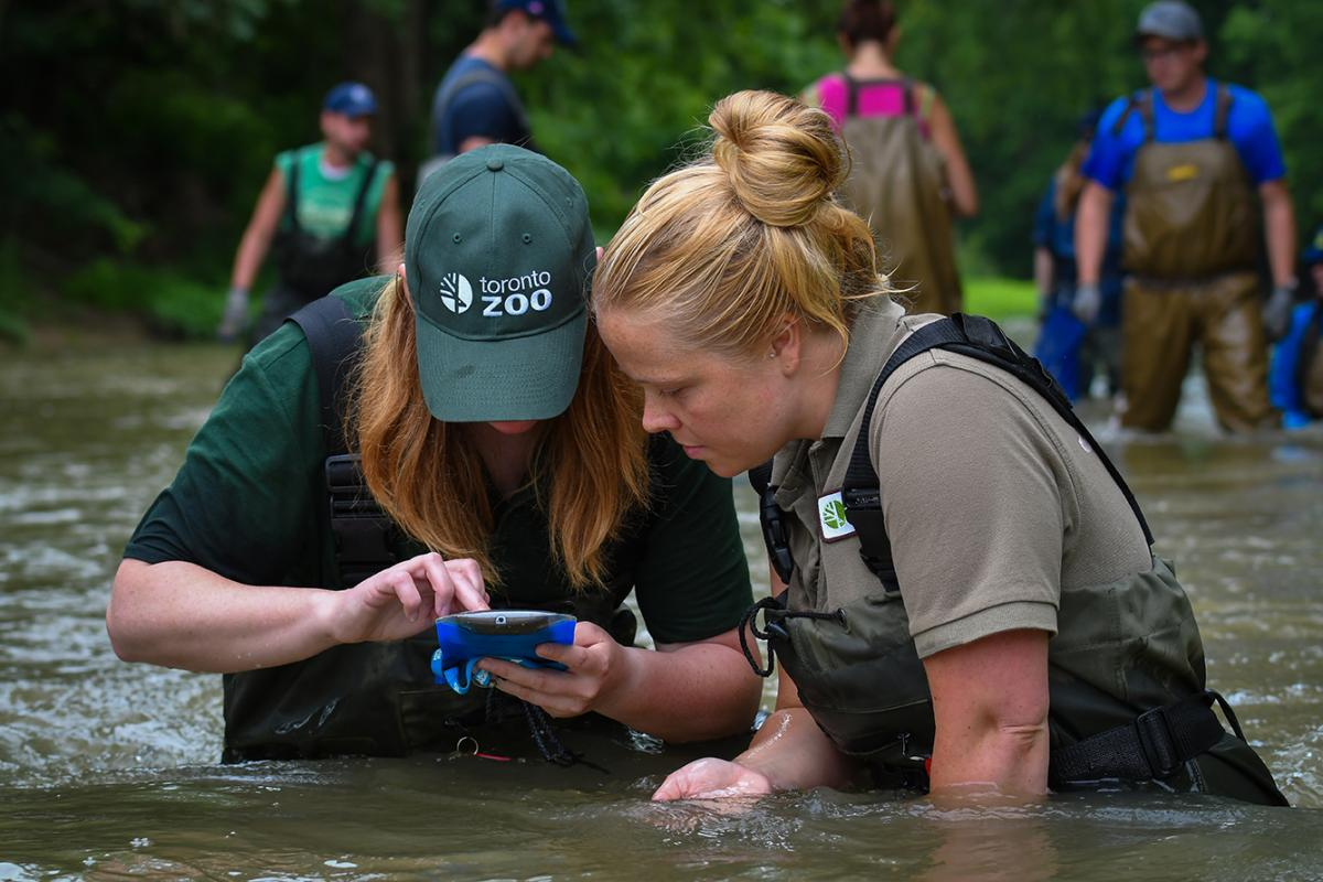 Toronto Zoo researchers using the Clam Counter app