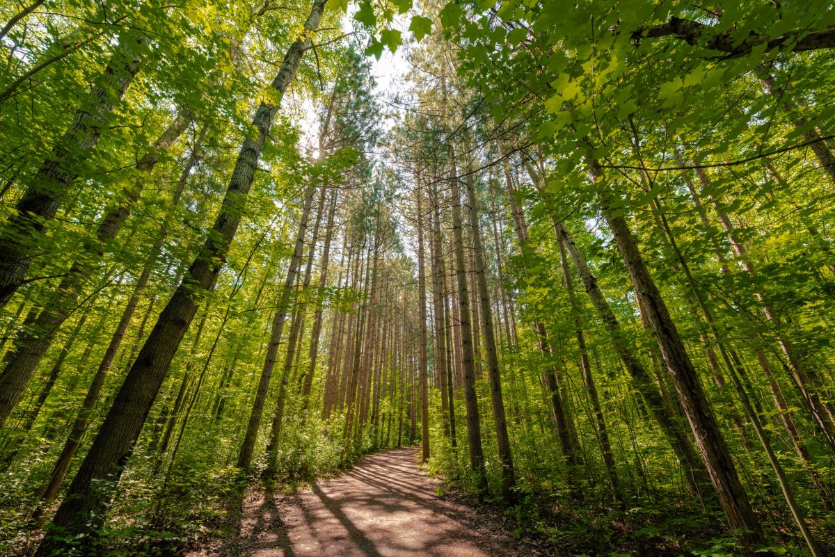 Forest trail in Ottawa, Ontario