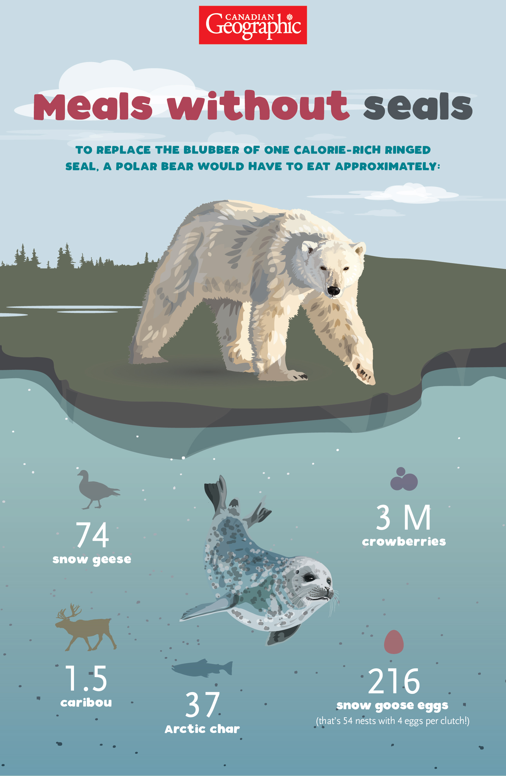 Infographic shows that polar bears would have to eat One and a half caribou  37 Arctic char  74 snow geese  216 snow goose eggs (that's 54 nests with 4 eggs per clutch!) OR 3 million crowberries to replace one calorie-rich ringed seal